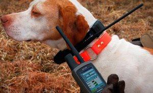электроошейник для собак