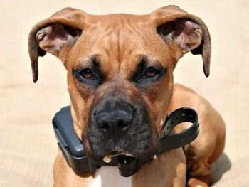 ошейник антилай для собак